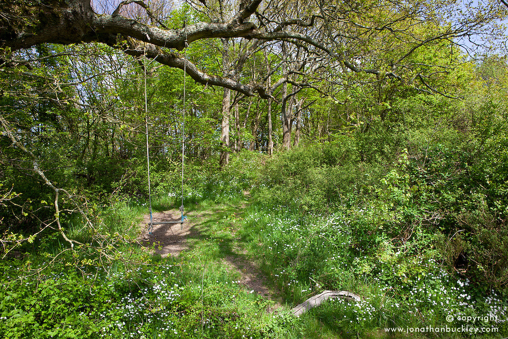 Woodland path with swing hanging from tree