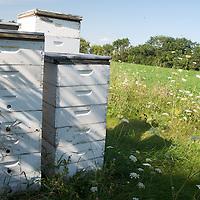 Heartland - Honey Wisconsin