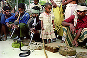 Near Lucknow in North India snake charmers can be seen playing to a crowd of onlookers. Snakes are deaf and therefore cannot hear the bean (flute) being played, rather they move to the movement of the bean as the charmers sways from side to side. In the photo a young girl can be seen holding onto the tail of a snake..