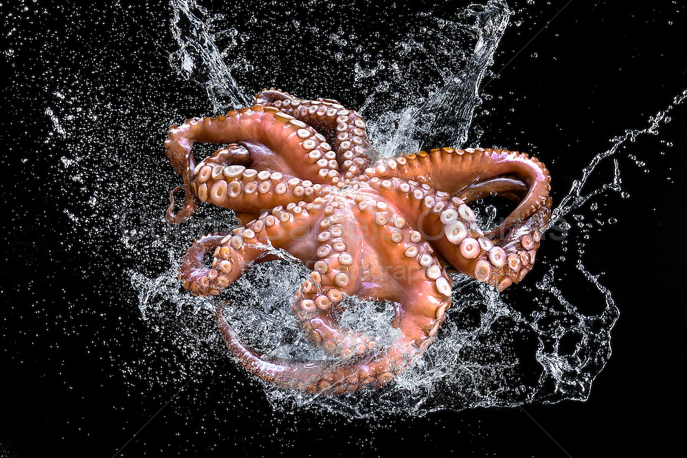 Fresh octopus in water splash on black background.