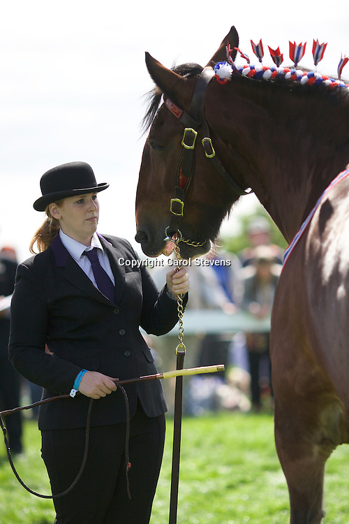 Mr G I Holmes'  10 yrs old Bay Gelding<br /> Westside John<br /> Sire  Moorfield Edward<br /> 2nd  Gelding, 4 yrs old and over Class