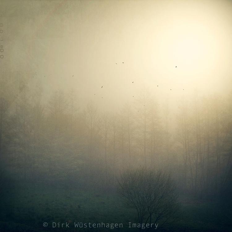 Sun shining through the fog on an autumn morning. Textured photography.