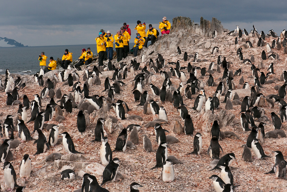 Tourists visit Half Moon Island, home to over 3000 pairs of chinstrap penguins, many with chicks at this time of year, late in the Antarctic summer.