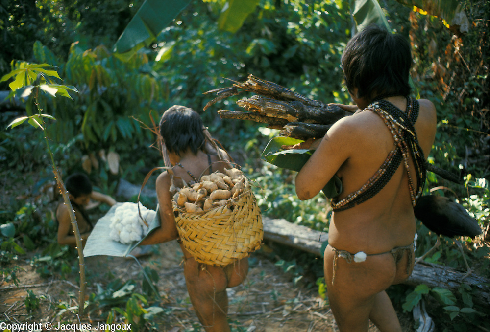 Slash-and-burn agriculture by Indians of Guiana Highlands of Venezuela: Hoti woman and daughter returning from garden with harvest of firewood, sweet potatoes, cotton.