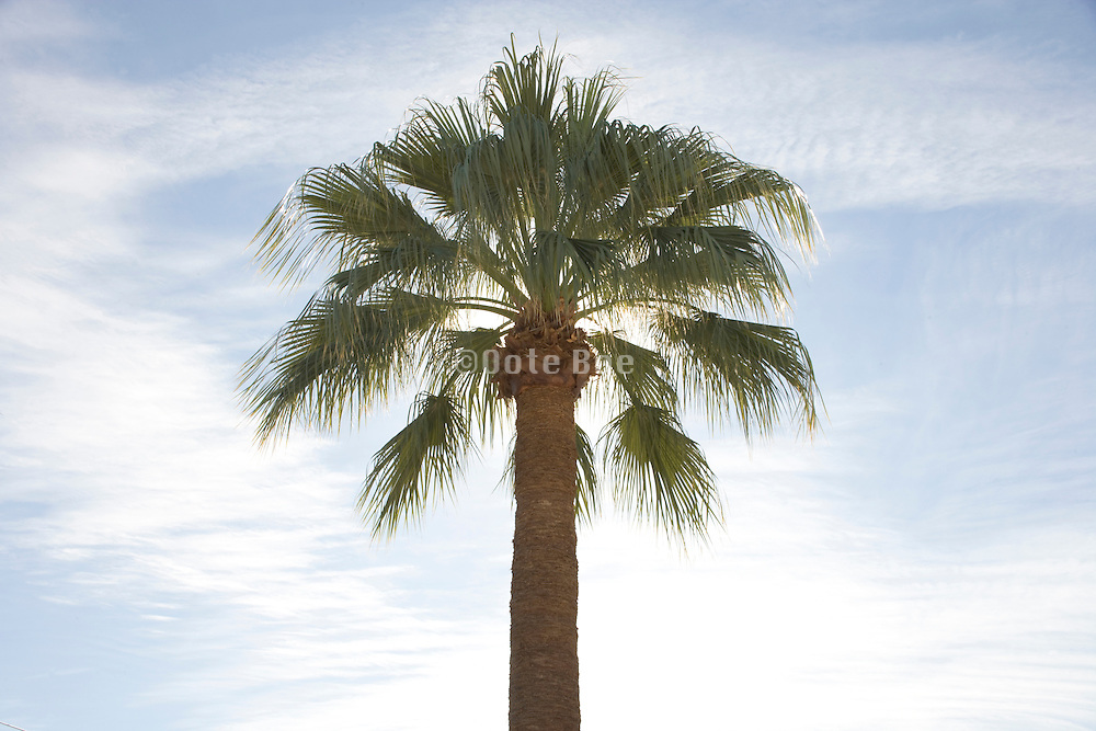 palm tree with the sun right behind it