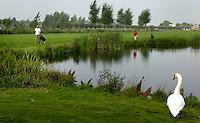 Nieuwerkerk aan de IJssel - Openbare golfbaan Hitland. Zwaan .Foto KOEN SUYK