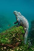 Galapagos December 2014 Trip
