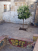 Lone tree in the Albaicin, Granada, Spain.