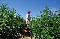 Broadway Hemp's Ryan Patterson checks on his plants on his Harnett County hemp farm.