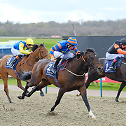 Lingfield 31st March