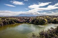 Punta Moreno, Isabella Island, Galapagos