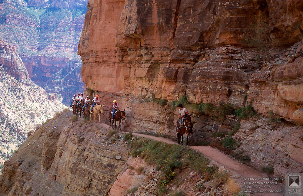 Mule train, N. Kaibab Trail, Roaring Springs Canyon, Grand Canyon National Park, Arizona..Media Usage:.Subject photograph(s) are copyrighted Edward McCain. All rights are reserved except those specifically granted by McCain Photography in writing...McCain Photography.211 S 4th Avenue.Tucson, AZ 85701-2103.(520) 623-1998.mobile: (520) 990-0999.fax: (520) 623-1190.http://www.mccainphoto.com.edward@mccainphoto.com.