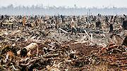 En skogsarbeider går gjennom restene av en regnskog i Riau i Sumatra i dette bildet fra 2007. I Indonesia og Malaysia hugges regnskogen og erstattes med enorme palmeoljeplantasjer. Hele 90% av verdens produksjon foregår her. Nye beregninger anslår at 98% av regnskogen i Borneo og Sumatra vil være ødelagt innen 2022. Siden tidlig i sommer har enorme skogbranner herjet i regionen. 40 millioner indonesere er berørt av brannrøyken, og nesten 140.000 har blitt syke i følge Chandran Nair i Global Institute for Tomorrow.