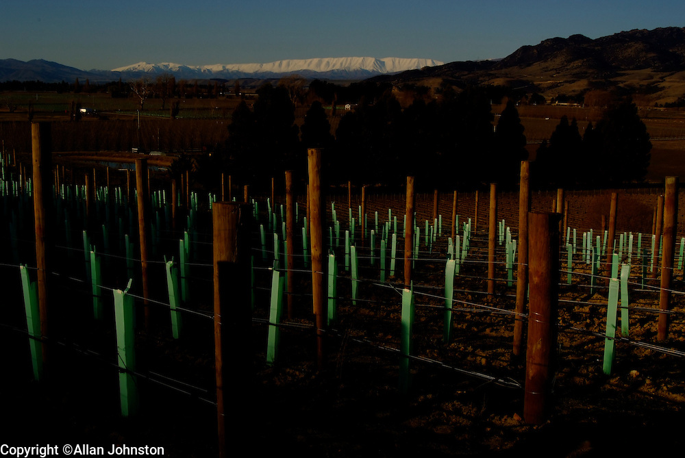 Alan Brady Wine pioneer of the Gibbston Valley