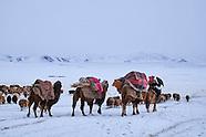 Kazakh Transhumance