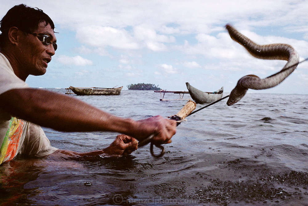 In Western Samoa, the preparation of food often begins in the lagoon just outside the family home. Here, son-in-law Alatupe Alatupe spears an eel for dinner. The family dugout outrigger canoe anchored just beyond him will serve as his transportation back to shore a short distance away. Published in Material World, page 172. The Lagavale family lives in a 720-square-foot tin-roofed open-air house with a detached cookhouse in Poutasi Village, Western Samoa.