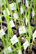 Laboratory, Seedling, Test, Growth, Scientific Experiment, Research,
