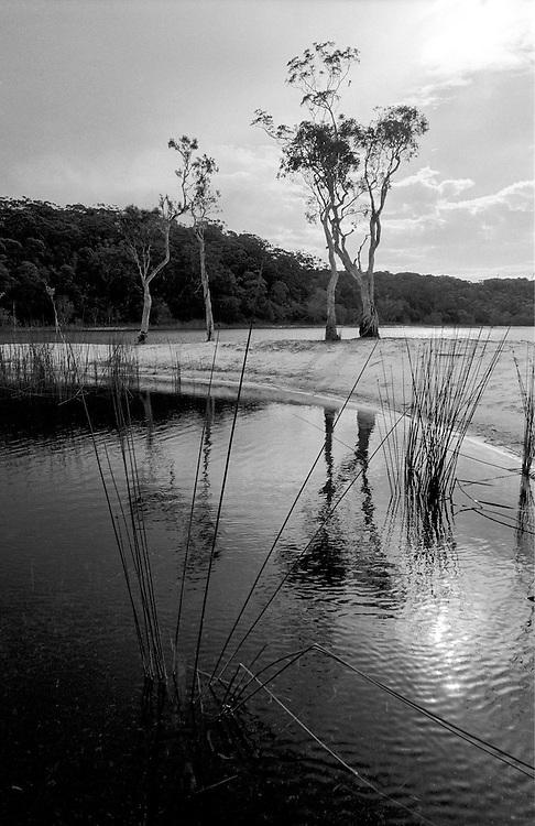 Poona Lake, Great Sandy National Park
