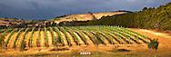 vineyard sunrise Geelong
