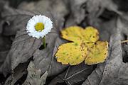 Flower and leaf | Blomster og blad