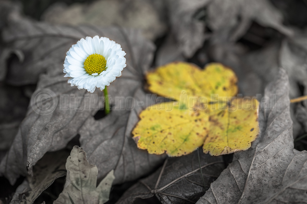 Flower and leaf | Blomster og blad