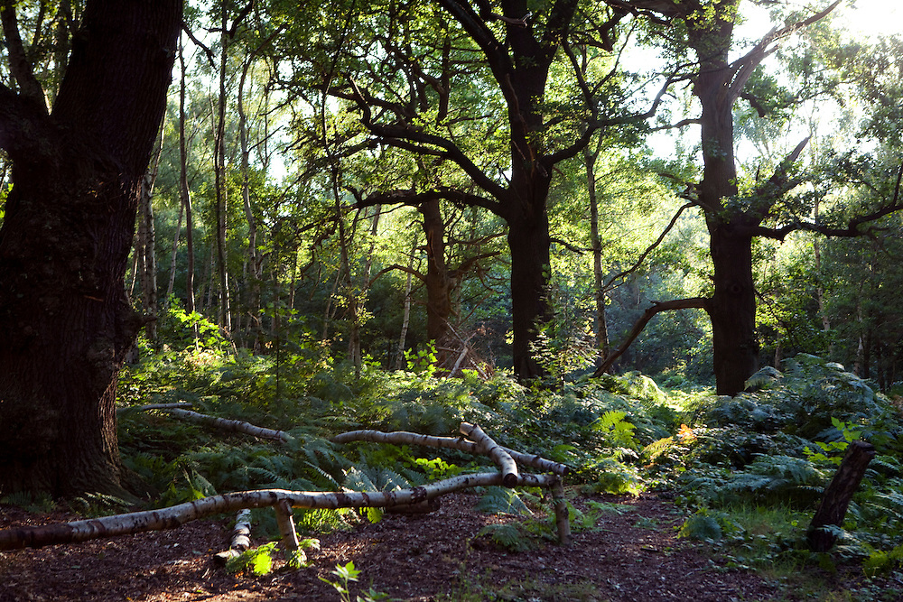 Sherwood Forest, Nottinghamshire