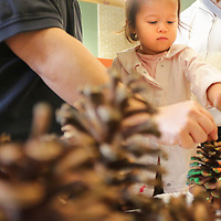 Clara Huang, 3. decorates a Pine Cone Bird Feeder with her parents Anthony Huang, left, and Molly Huang Saturday December 20, 2014 during Nature Holiday Creations at Halyburton Park in Wilmington, N.C. (Jason A. Frizzelle)Clara