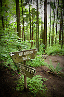 Wildwood trail in Forest Park. Portland, OR.