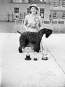 """19/07/1952<br /> 07/19/1952<br /> 19 July 1952<br /> Dog show: All Breed Championship, 10th Annual Show of the Combined Canine Clubs at Terenure College,<br /> Templeogue Road Terenure Dublin. Miss Deirdre Ryan, Dublin, with P. McDonnells Kerry Blue """"Duellist Macdon"""" who won Best in Show."""