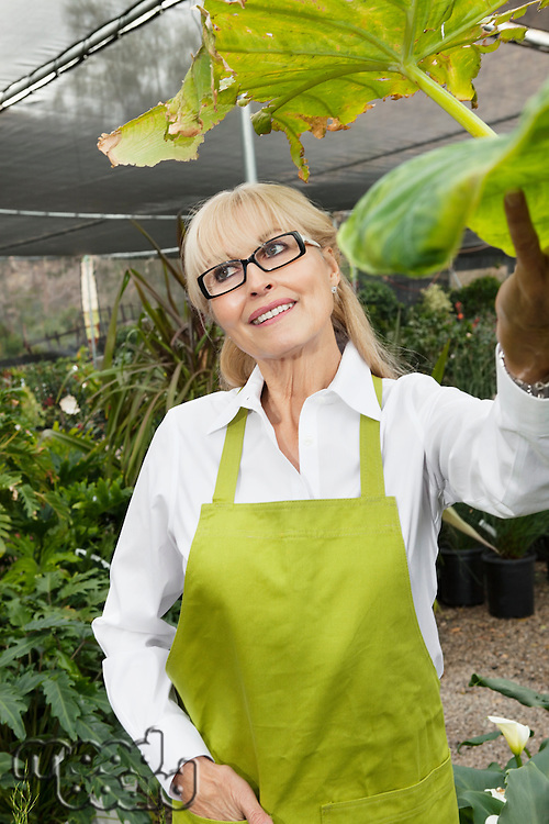 Happy senior woman gardener standing in greenhouse while looking away