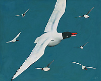 This fine art piece by Jan Keteleer depicts a number of Black Headed Gulls in the midst of flight and fancy. There is a gentle realism to this piece that allows you even hear the sounds you would imagine these animals might make. This is a beautiful summertime scene that can appeal to just about anyone who loves to get away. -<br /> <br /> BUY THIS PRINT AT<br /> <br /> FINE ART AMERICA<br /> ENGLISH<br /> https://janke.pixels.com/featured/beautiful-black-headed-gulls-jan-keteleer.html<br /> <br /> WADM / OH MY PRINTS<br /> DUTCH / FRENCH / GERMAN<br /> https://www.werkaandemuur.nl/nl/shopwerk/Prachtige-Kokmeeuwen-met-zwarte-kop/517239/132