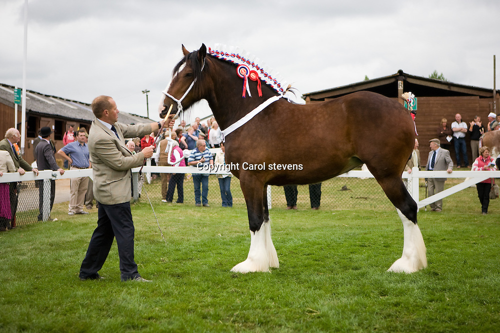 Great Yorkshire Show 2010   <br /> Winner of the 3yr old Filly or Gelding class <br /> Mr F W O Richardson &amp; Sons  bay filly<br /> Bewholme Moonlight Sensation<br /> sire  Moorfield Edward