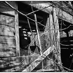 Broken glass, old weathered wood, and vines growing over the shed out back are some of the nostalgic symbols of the old south.