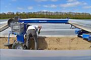 Nederland, Groesbeek, 22-4-2015 Langzaam komt het aspergeseizoen op gang. De eerste kopjes steken al boven de grond uit en worden gestoken. De aspergespin is een elektrische landbouwmachine die stapvoets beweegt, het plastic optilt zodat het aspergebed vrij komt, en het plastic weer laat zakken. Vooral handig als er nog niet massaal wordt gestoken en de grond warm gehouden moet worden om het groeiproces te versnellen.Foto: Flip Franssen/Hollandse Hoogte