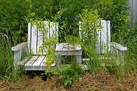 Old forgotten adirondack chairs.
