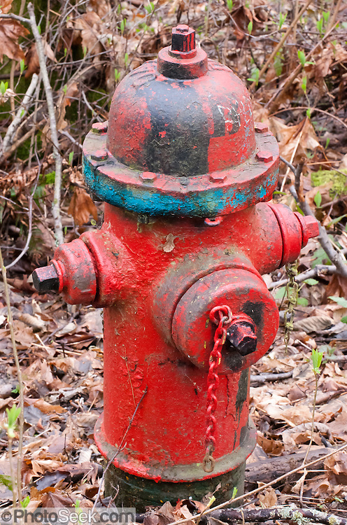 Red fire hydrant in Discovery Park, Seattle, Washington.