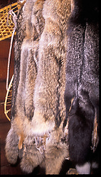 Kenai Peninsula, AK:  Trapping is a primary industry in America's 49th state.  Numerous pelts are available for sale at many places, particularly around Seward and Homer.