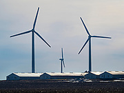 24 FEBRUARY 2020 - BLAIRSBURG, IOWA:  Wind turbines on a hog farm near Blairsburg. There are more than 100 wind turbines at this location. In 2019, Iowa generated more than 41% of its electrical needs with wind power. Iowa is the 2nd leading producer of wind energy in the US, only Texas generates more electricity by wind power. There are more than 4,500 wind turbines in Iowa.      PHOTO BY JACK KURTZ