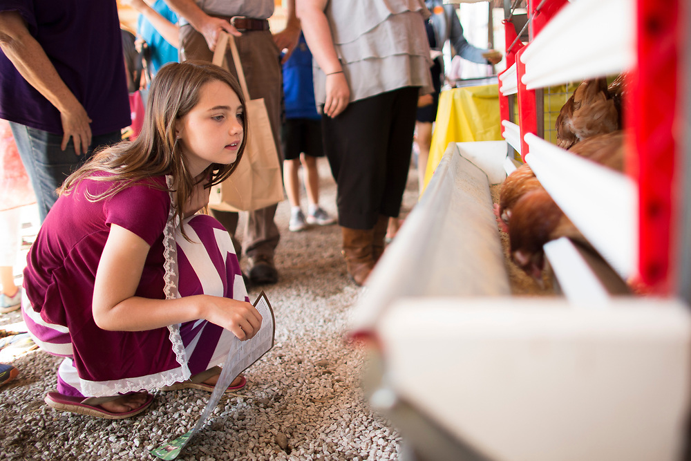 Kiera Pandy (9) checks out some chickens in their enriched cages during the Breakfast on the Farm event near Shedden, Ontario, Saturday, June 24, 2017.<br /> Farmers Forum/ Geoff Robins