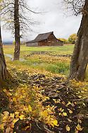 Autumn color, Moulton Barn, Grand Tetons, Jackson Hole, Wyoming