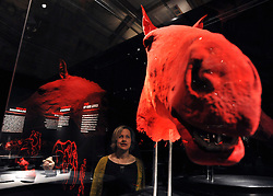 © Licensed to London News Pictures. 03/04/2012. London, UK. A woman looks at the plastinated head of a horse. The launch of The Natural History Museum's Animal Inside Out exhibition. The exhibition is the UK premiere from the team behind Gunther von Hagens' Body Worlds shows, with almost 100 specimens on show. Animal Inside Out runs from April 6 April to September 16 at the Natural History Museum, London. Photo credit : Stephen SImpson/LNP