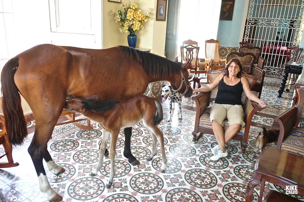 Newborn baby horse at the living room of horse whisperer Julio Muñoz