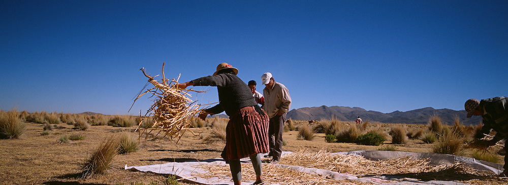 "Workers harvest quinoa on the arid highlands near Challapata, Bolivia. .The nutritional qualities of the seed have generated a new export market for South American farmers. Demand for the grain-like seed are increasing due to its nutritional benefits. Quinoa contains more protein than any other ""grain"" and includes all eight essential amino acids needed for tissue development. Quinoa has been cultivated in the Andes since 3000BC. Challapata, Bolivia, 12th May 2011. Photo Tim Clayton"