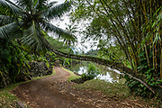 The entry road to Allerton Garden curves under a leaning palm tree along Lawai Stream, on the south shore of Kauai, Hawaii, USA. Address: 4425 Lawai Rd, Koloa, HI 96756. Nestled in a valley transected by the Lawai Stream ending in Lawai Bay, Allerton Garden is one of five gardens of the non-profit National Tropical Botanical Garden (ntbg.org).