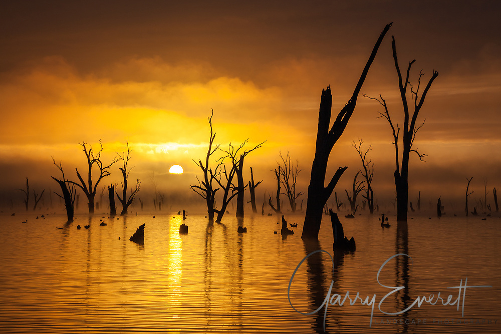 Sunrise at Lake Mulwala, light and fog interacting to create a haunting but beautiful sunrise