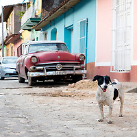Early morning with a friendly stray in Trinidad, Cuba.