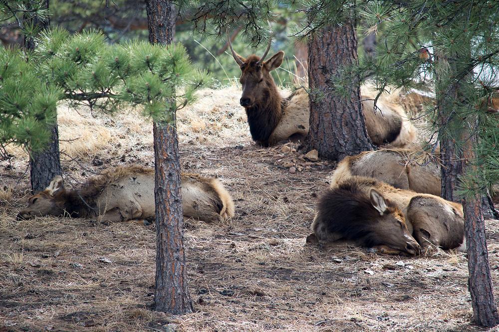 Estes Park, Colorado<br /> 31320173:25:48 PM<br /> 2705.6125