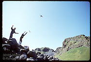 Two boys toss puffins into air, releasing the chicks to sea after saving them nite before; Heimaey Iceland