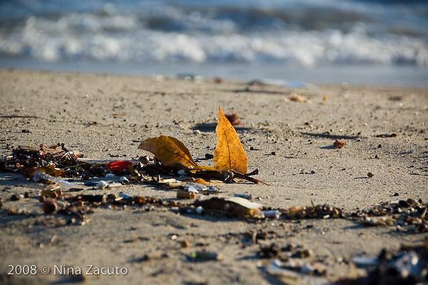 Lone leaf on the beach.