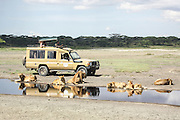 Africa, Tanzania, Ngorongoro Conservation Area (NCA), Lions and a tourist vehicle in the savanna